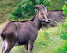 Wildlife Sanctuary of Kerala