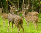 Wildlife Sanctuary of Tamil Nadu