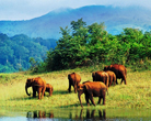 South India Wildlife Sanctuaries